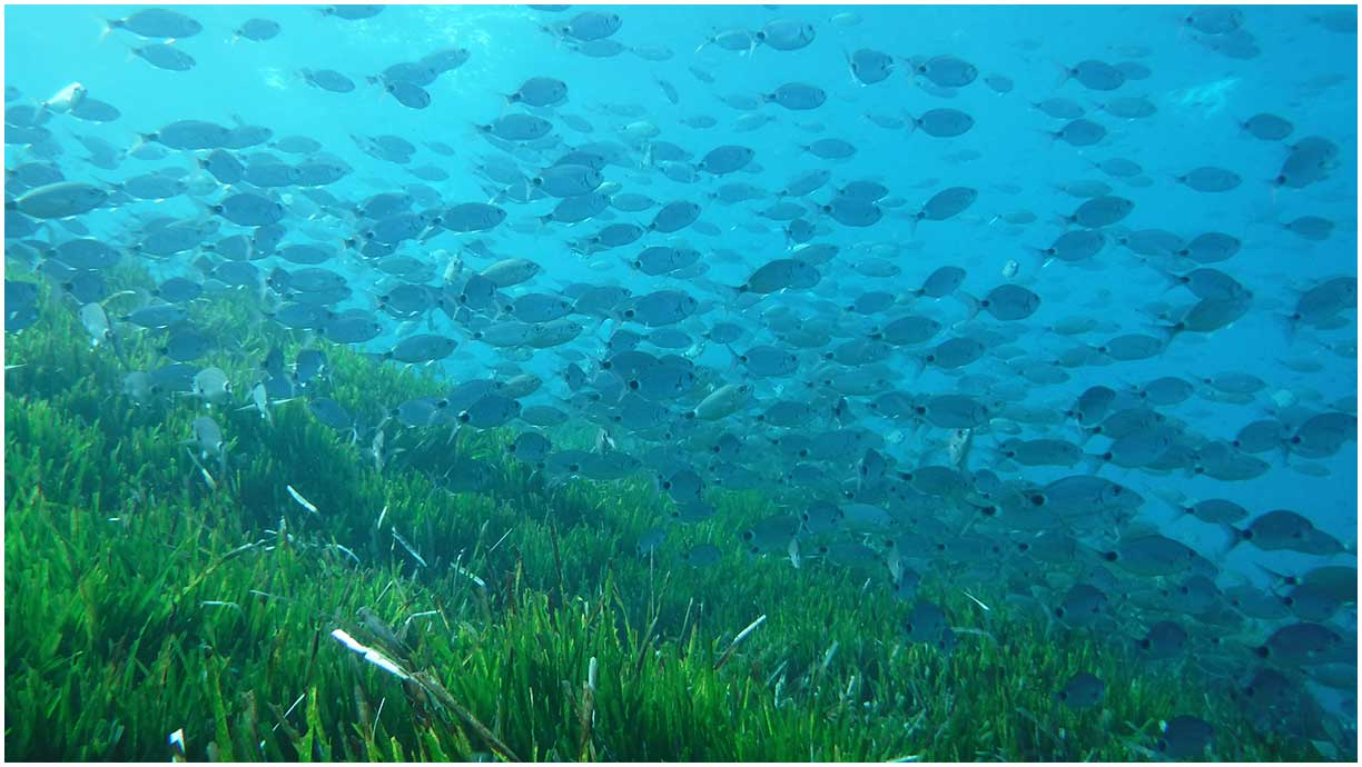 Protected ecosystem of Posidonia oceanica. VOLCANIC TOURS. Boat Routes Cabo de Gata