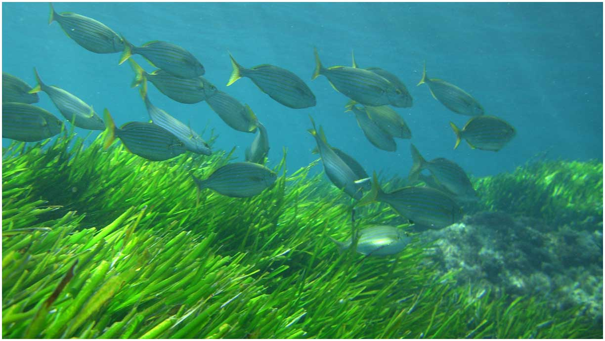 Prairies of posidonia full of life. VOLCANIC TOURS. Boat Routes Cabo de Gata